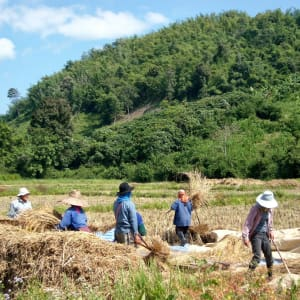Mietwagenrundreise Goldenes Dreieck ab Chiang Mai: Northern Thailand: Farmers