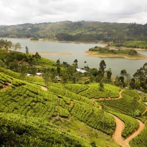 Sri Lanka für Geniesser ab Colombo: Nuwara Eliya Tea Plantation