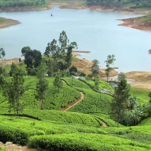 Les hauts lieux du Sri Lanka de Colombo: Nuwara Eliya: Tea Plantation