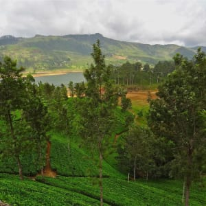Découverte active du Sri Lanka de Colombo: Nuwara Eliya: Tea Plantations