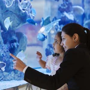 Taj Santacruz in Mumbai: Fish Tank