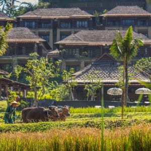 Mandapa, A Ritz-Carlton Reserve in Ubud: Rice Paddy at Mandapa