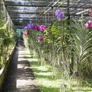Circuit en voiture de location Mae Hong Son de Chiang Mai: Orchid Farm