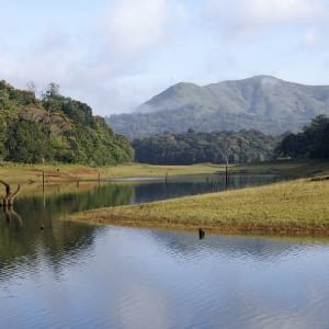 Naturschönheiten Keralas ab Kochi: Periyar: Wildlife Sanctuary