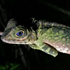 Natur pur in Sarawak ab Kuching: Permai