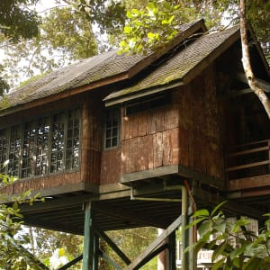 Natur pur in Sarawak ab Kuching: Permai Rainforest Resort Treehouse