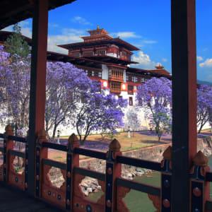 Au pays du Dragon tonnerre de Paro: Punakha: Dzong