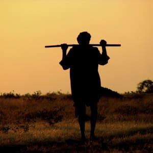 Goldenes Dreieck ab Delhi: Rajasthan: Shepherd in the evening sun