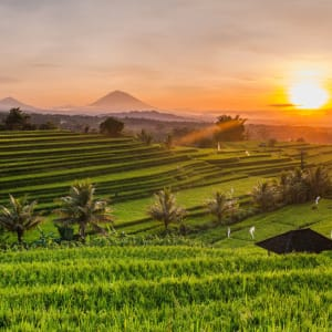 Bali compacte de Sud de Bali: Rice terraces at sunrise in Bali