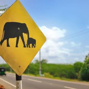 Mietwagenrundreise in den Süden ab Bangkok: Road Sign Elephants