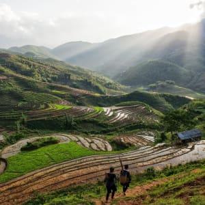 Natur & Kultur rund um Sapa ab Hanoi: Sapa: Rice Terraces