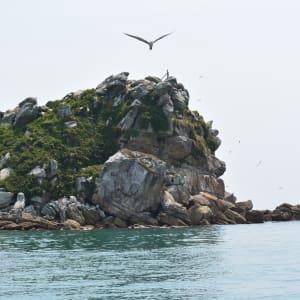 Les hauts lieux de Bornéo de Kuching: Satang Island Exc Birdrock