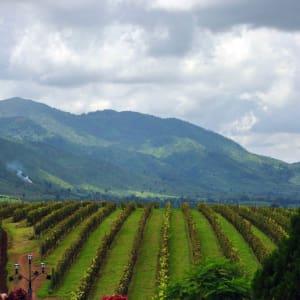 La fascination du Myanmar – un pays en mutation de Yangon: Shan State: Aythaya Vineyard