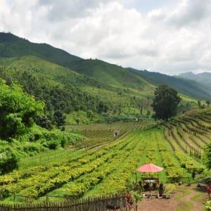 Le pays doré de Yangon: Shan State: Aythaya Vineyard