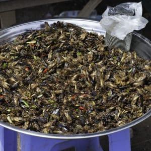 Von Angkor nach Phu Quoc ab Siem Reap: Skun - fried grasshoppers