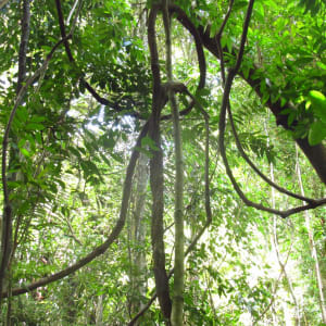 Bungaraya Island Resort in Kota Kinabalu: Hiking 02