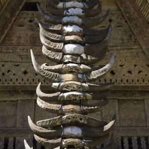 Sulawesi-Torajaland Rundreise ab Makassar: Sulawesi Toraja Buffalo Horns