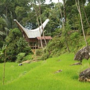 Sulawesi-Torajaland Rundreise ab Makassar: Sulawesi Toraja Traditional House
