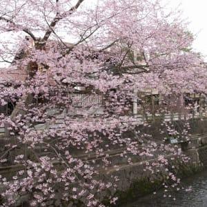 Circuit en groupe «L'éclat du Japon» de Tokyo: Takayama