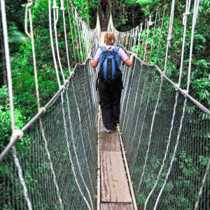 Taman Negara Nationalpark ab Kuala Lumpur: Taman Negara: Canopy bridge