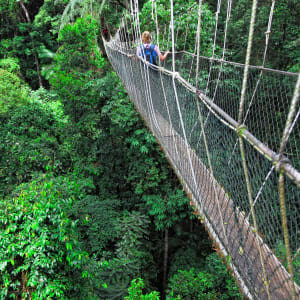Taman Negara Nationalpark ab Kuala Lumpur: Taman Negara Canopy Way
