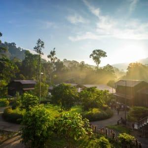 Taman Negara Nationalpark ab Kuala Lumpur: Taman Negara in the morning