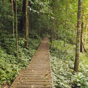 Malaysia - Grosse Mietwagenrundreise - SIN-PEN ab Kuala Lumpur: Taman Negara Nationalpark