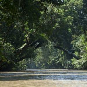 Taman Negara Nationalpark ab Kuala Lumpur: Taman Negara: River in the jungle