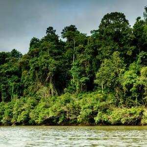 Taman Negara Nationalpark ab Kuala Lumpur: Taman Negara seen from the river Sungai Tembeling