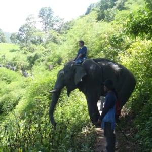 Nature & éléphants dans le nord de la Thaïlande de Chiang Mai: Thai Elephant Home