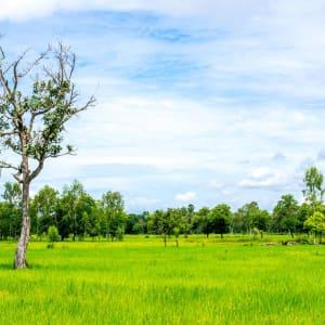 Mietwagenrundreise in den Süden ab Bangkok: Thailand Countryside