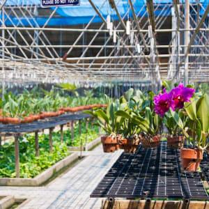 Circuit en voiture de location Triangle d'Or de Chiang Mai: Thailand: Orchid Farm