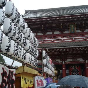 Circuit en groupe «Geisha» de Tokyo: Tokyo: Meiji Shrine