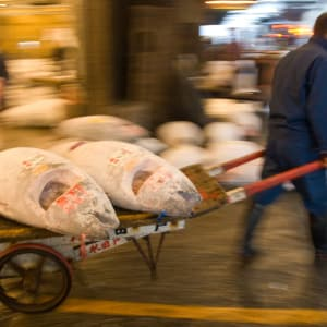 The Golden Route ab Tokio: Tsukiji Fish market in Tokyo