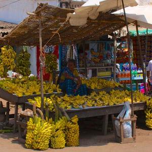 Odisha, terre des temples de Bhubaneswar: What a choice of bananas - Puri