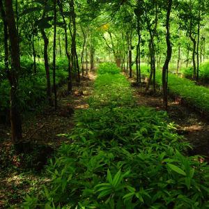 Ursprüngliches Dorfleben am Dohtawaddy Fluss in Mandalay: Yadanar bamboo & sandalwood farm