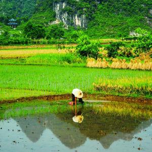 Rizières du cieletreliefs étranges de Guilin: Yangshou: Guangxi