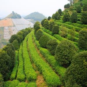 Märchenhaftes Südchina ab Shanghai: Yangshuo tea terrace