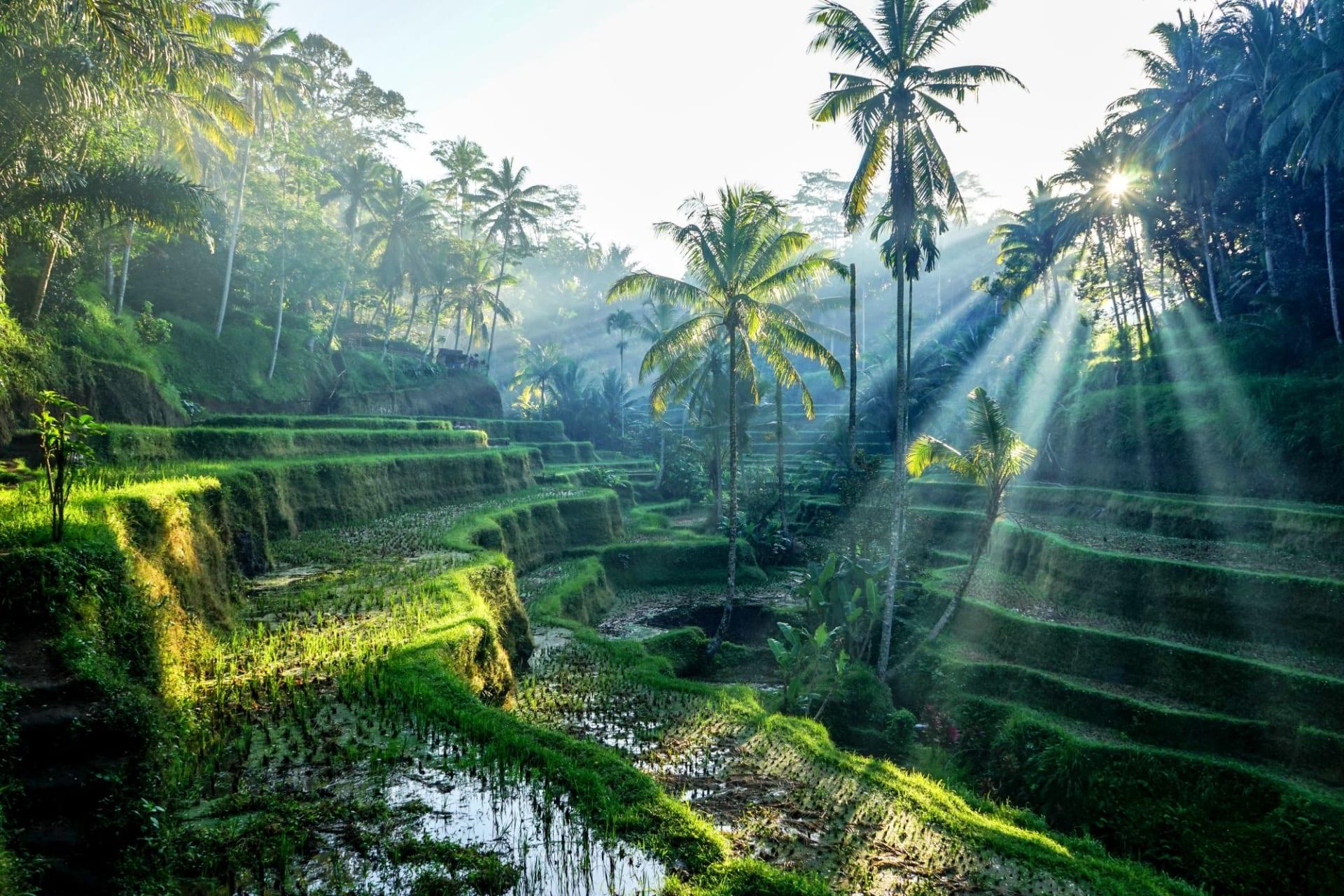 Bali Ubud Rice Terraces