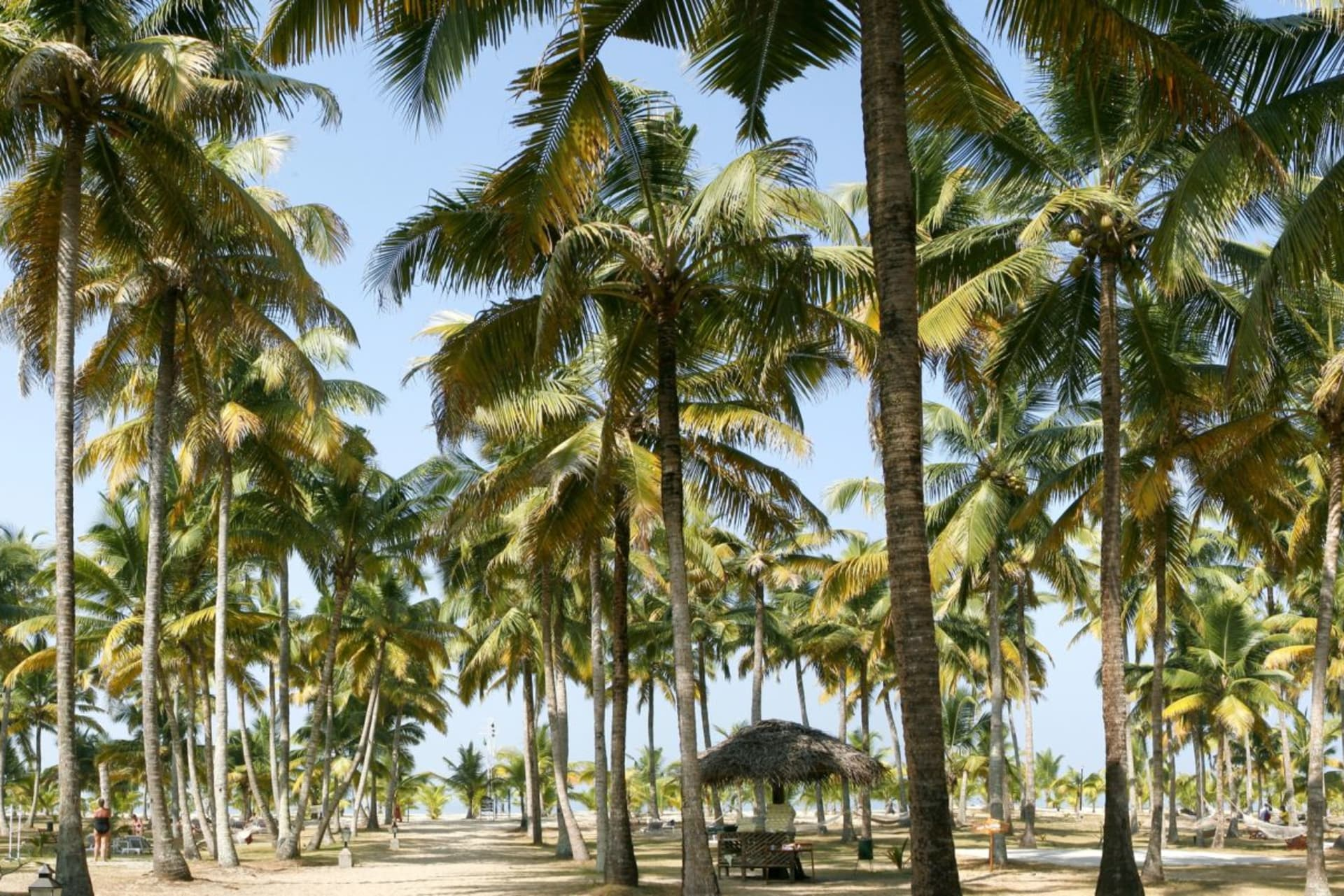 facilities: Garden Marari Beach Resort