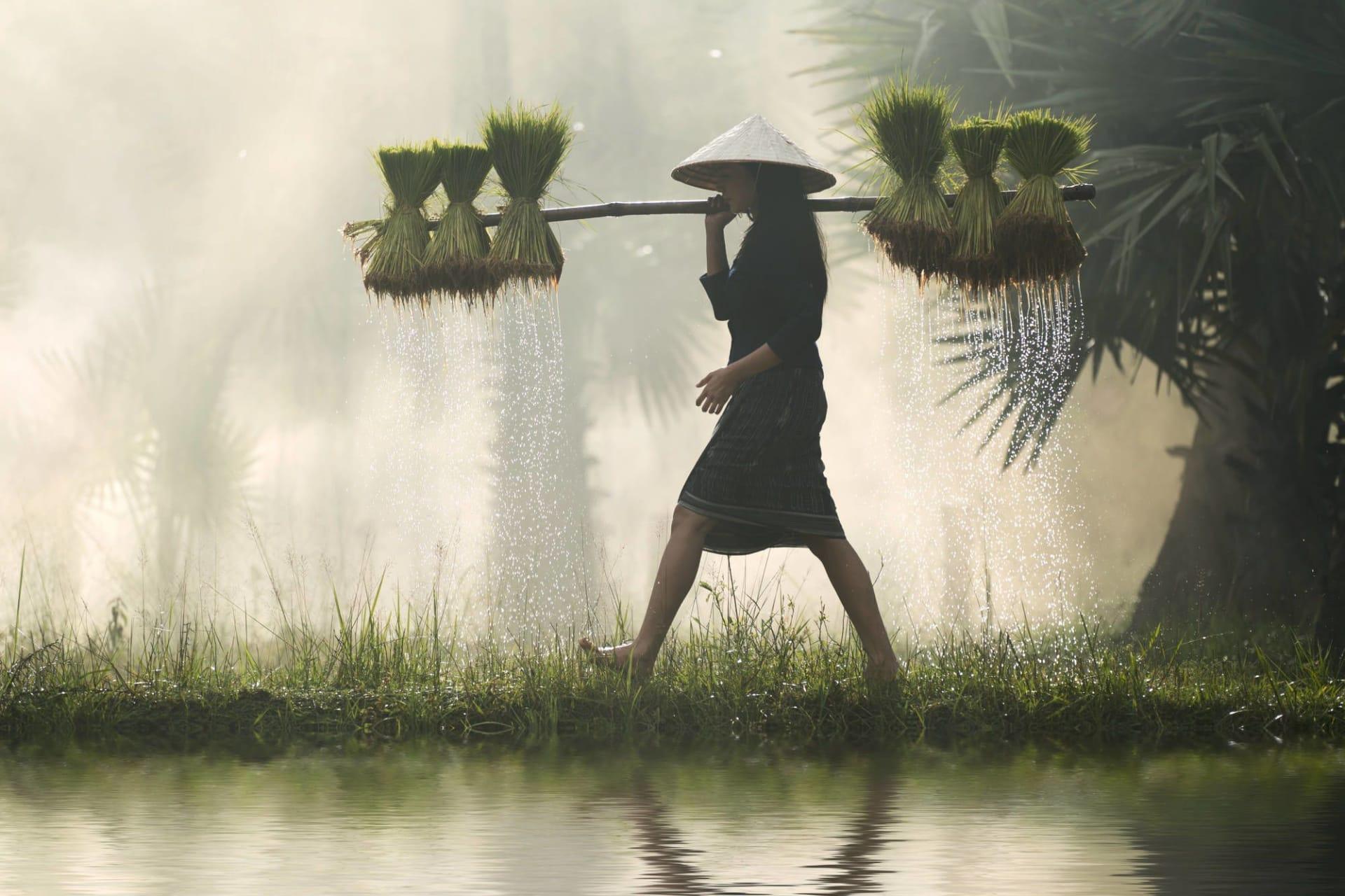 Female Farmer with rice seedlings