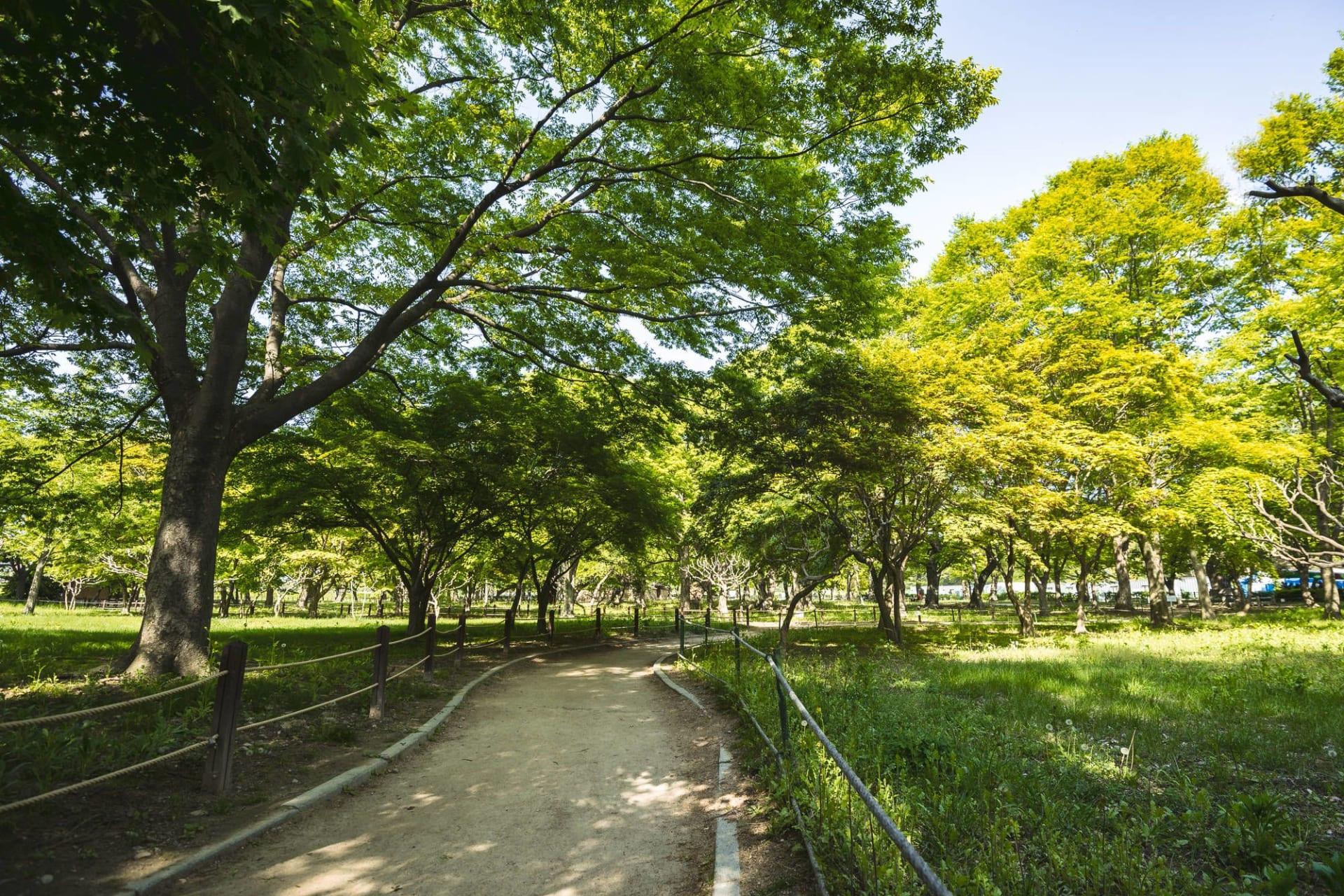 Gyeongju Gyerim forest