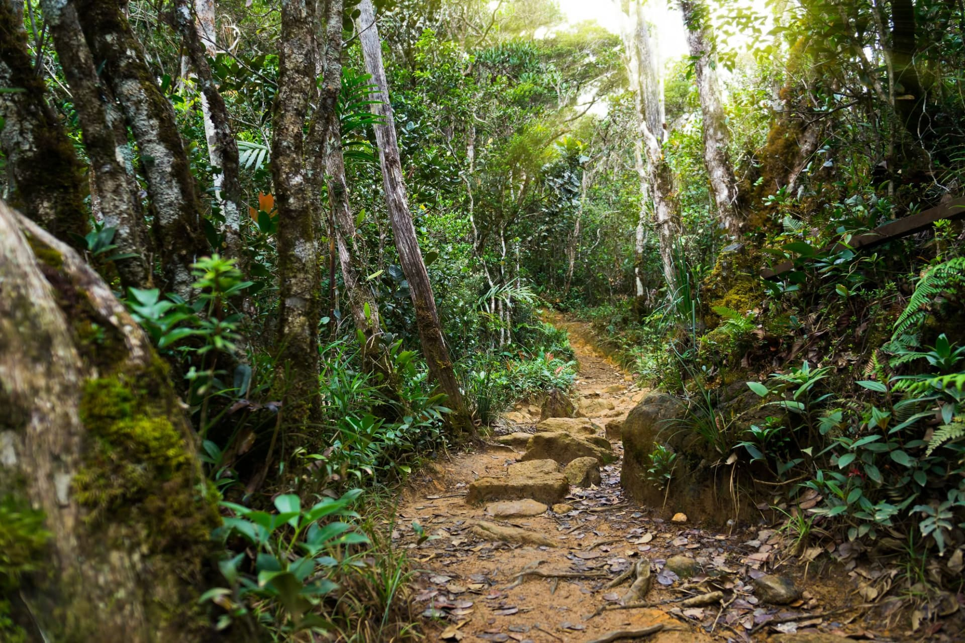 Kinabalu Park: Nature rain forest with morning sunlight