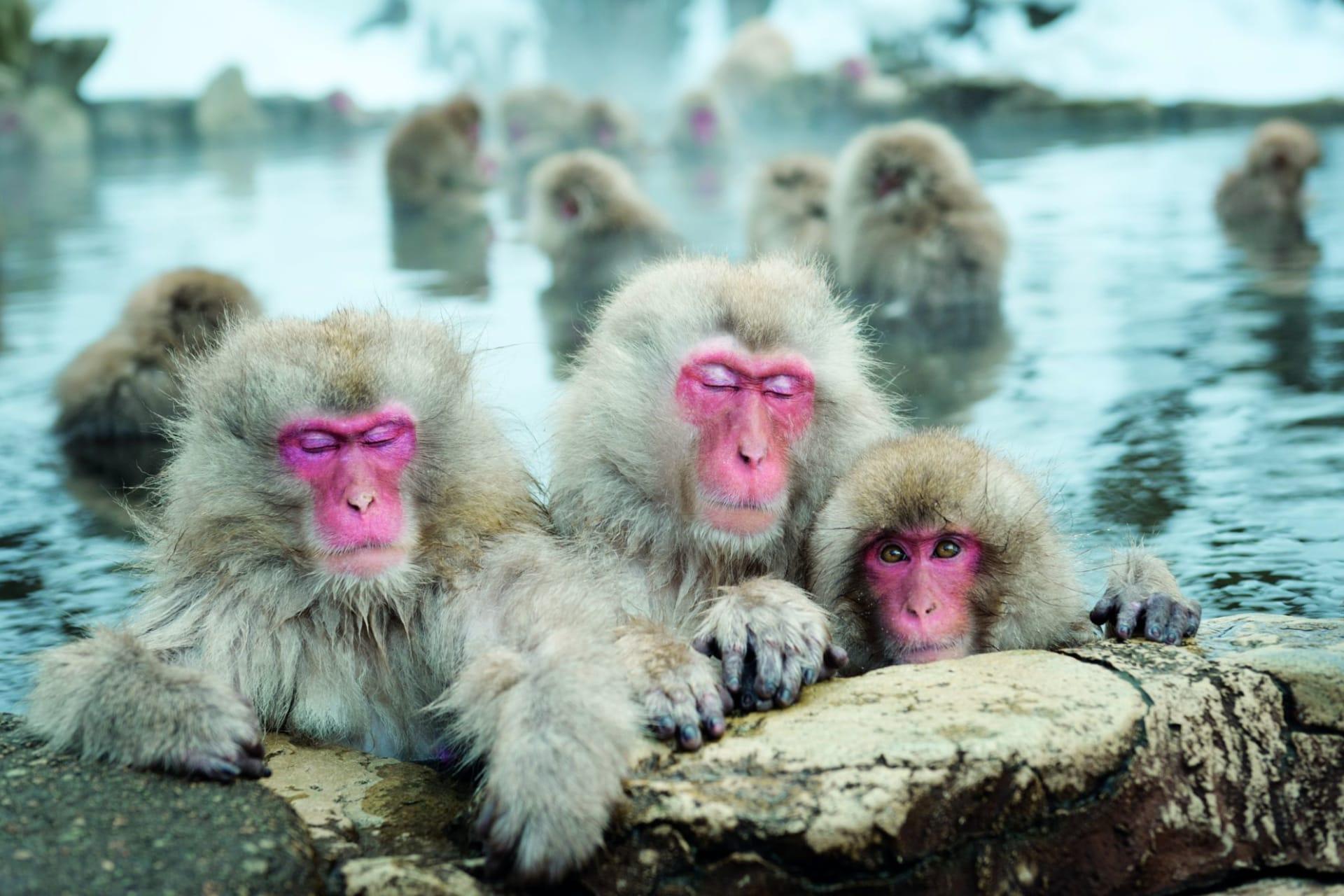 Nagano: Snow Monkeys