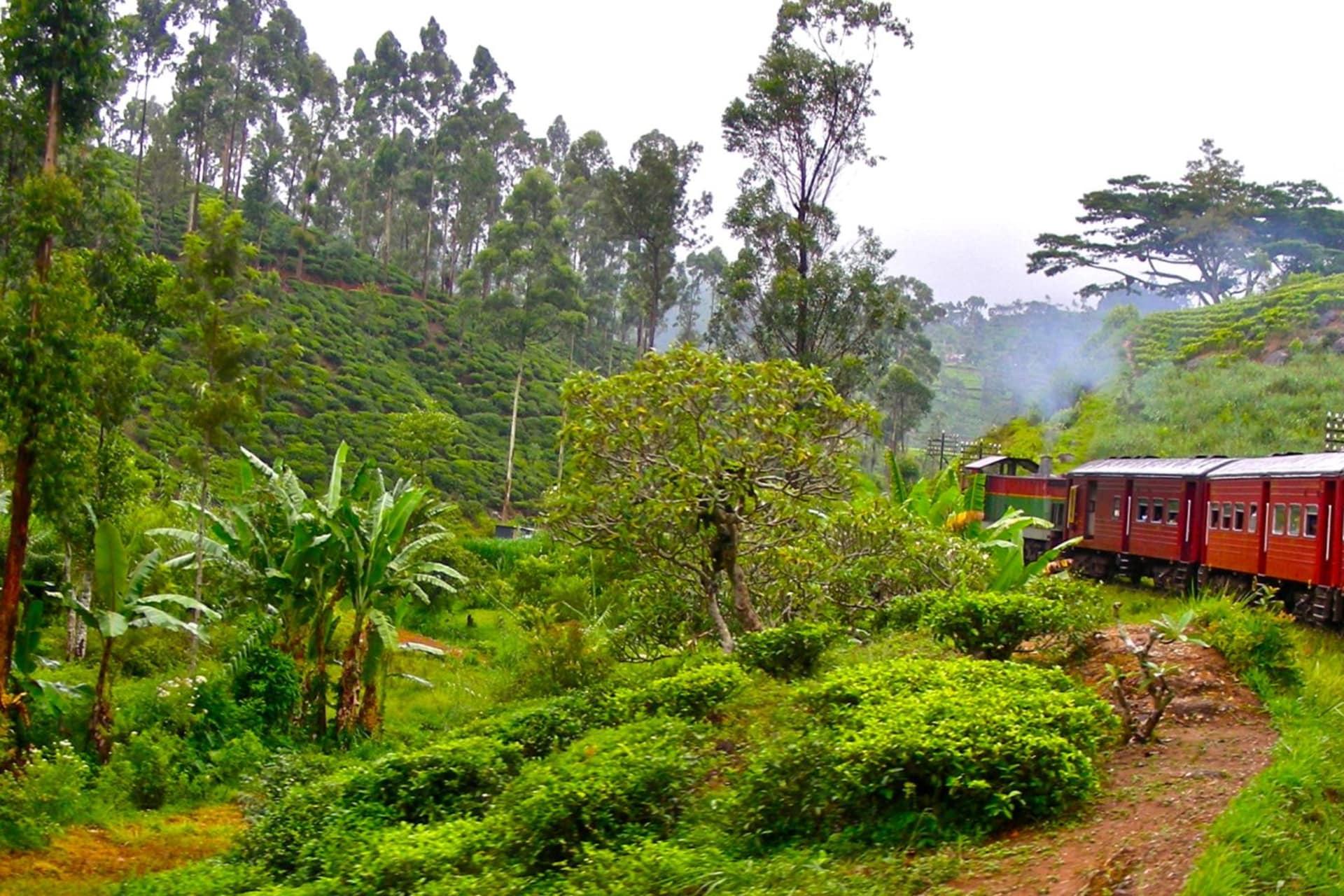 Nuwara Eliya train ride