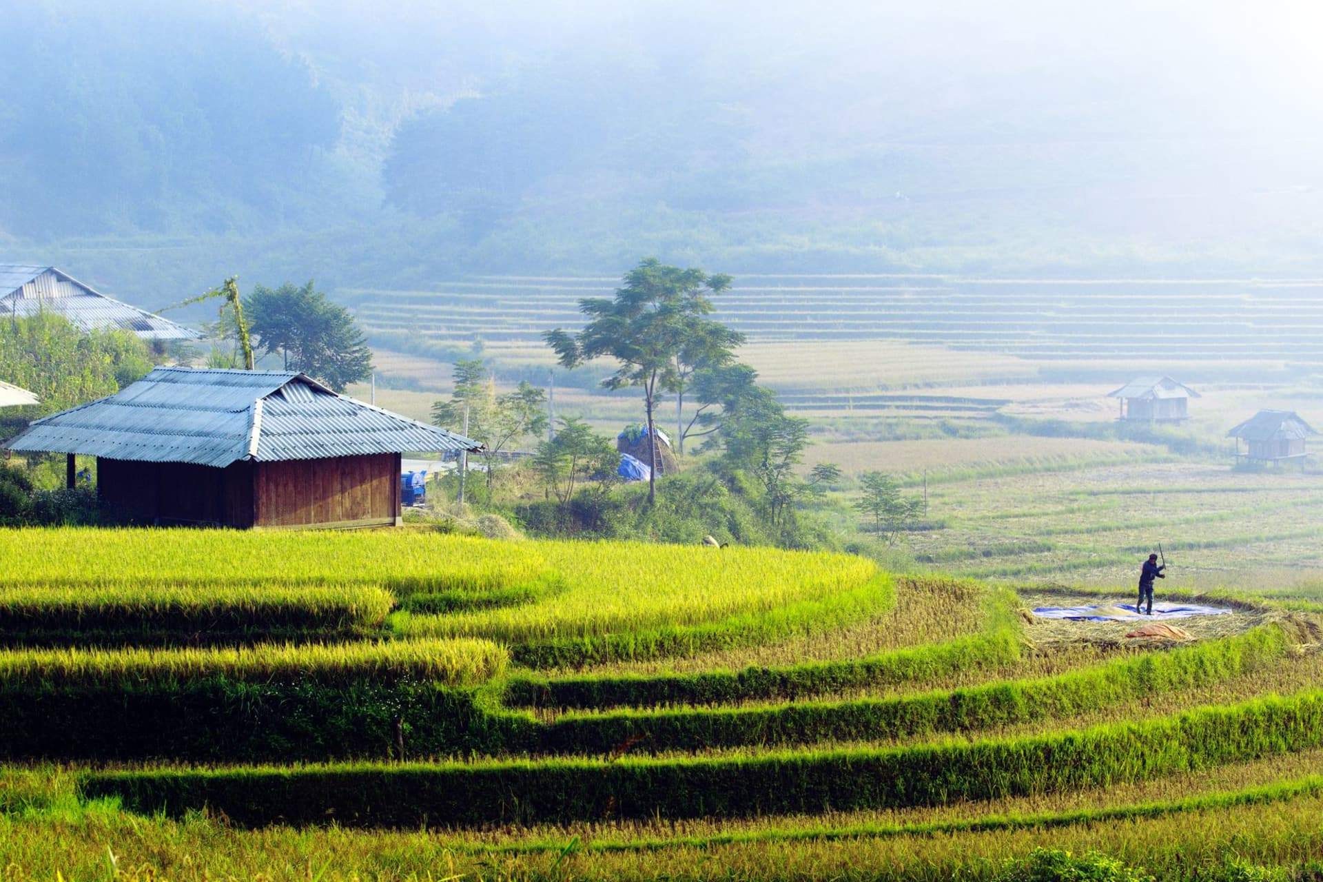 Sapa: house of Red Dao on footpaths and terraced fields