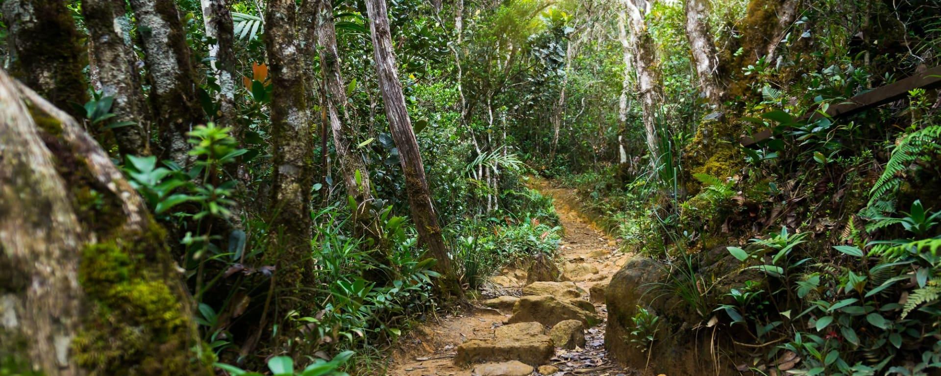 Mt. Kinabalu Park in Kota Kinabalu: Kinabalu Park: Nature rain forest with morning sunlight