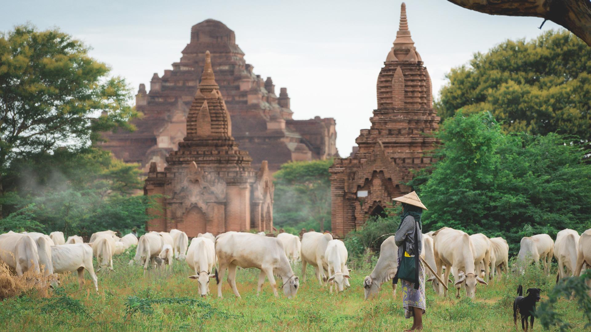 Landwirtschaft inmitten der Tempel