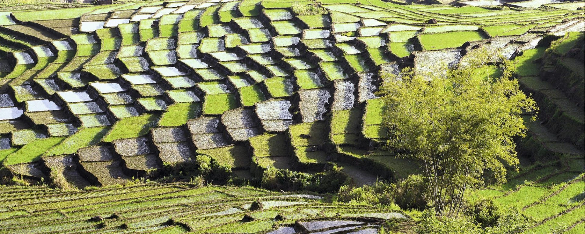 Flores - traditions, moeurs et volcans de Ende: Flores Ruteng Spiderweb rice field