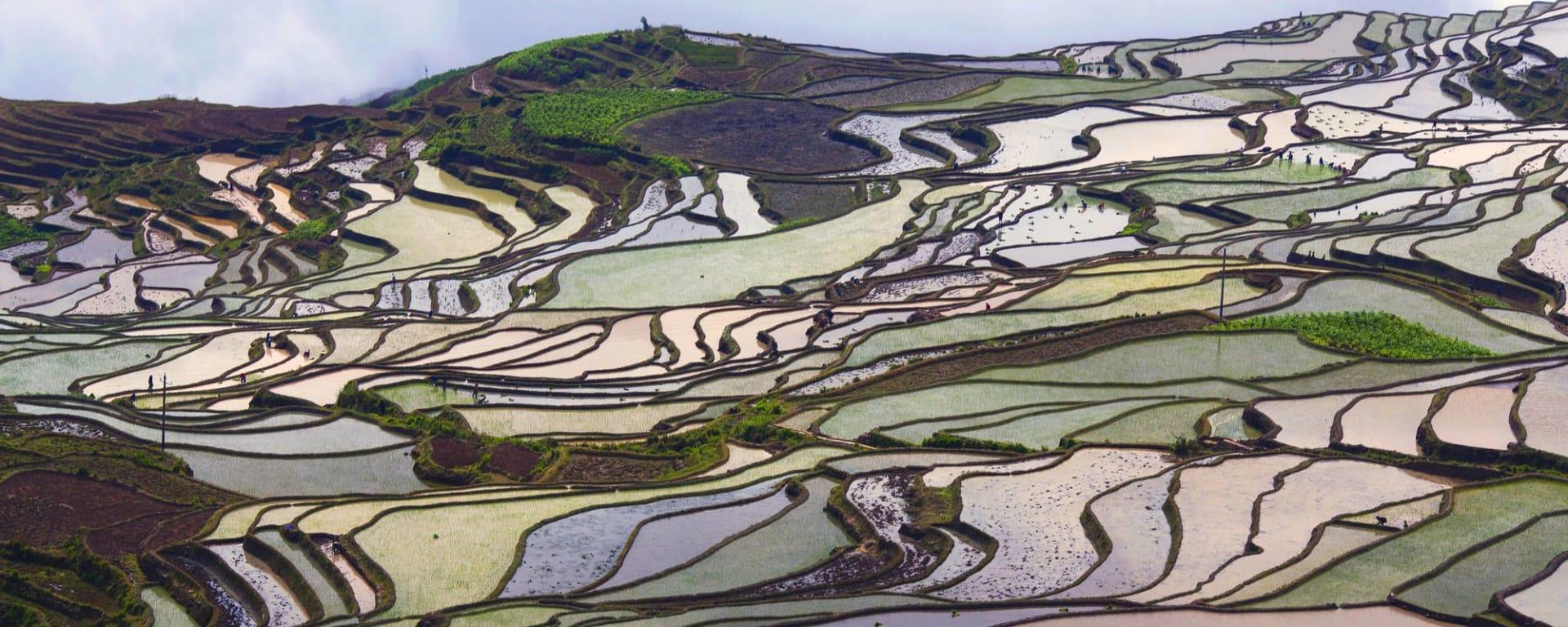 Tout savoir sur les voyages et les vacances en Chine: Yuanyang rice terraces